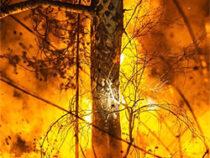 Евгений Куйвашев ввел ограничения на посещение лесов из-за опасности новых пожаров